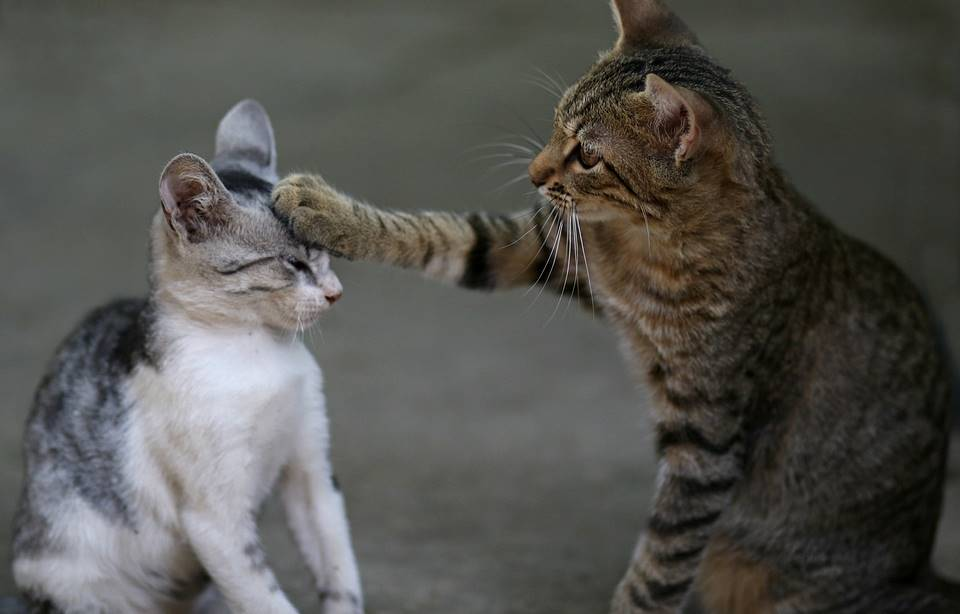 Mejores chistes y memes sobre Gatos