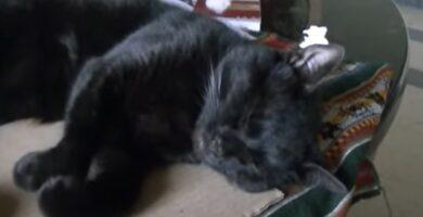 gato durmiendo y soñando