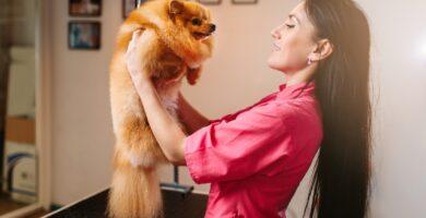 Perro Octavio y su humana