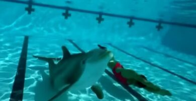 delfin robot