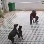 Evita ataque de perros