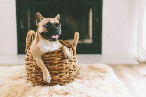 perro en canasta