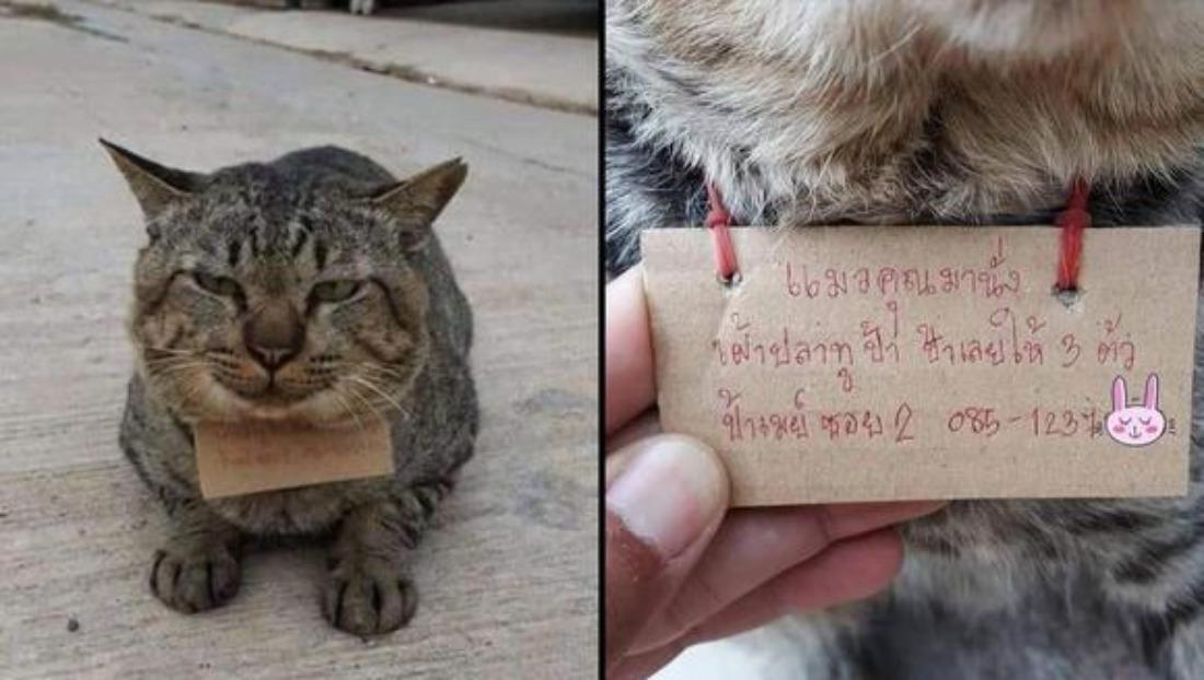 Gato desaparece varios días de casa y regresa endeudado