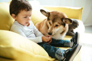 perro y gato con niño