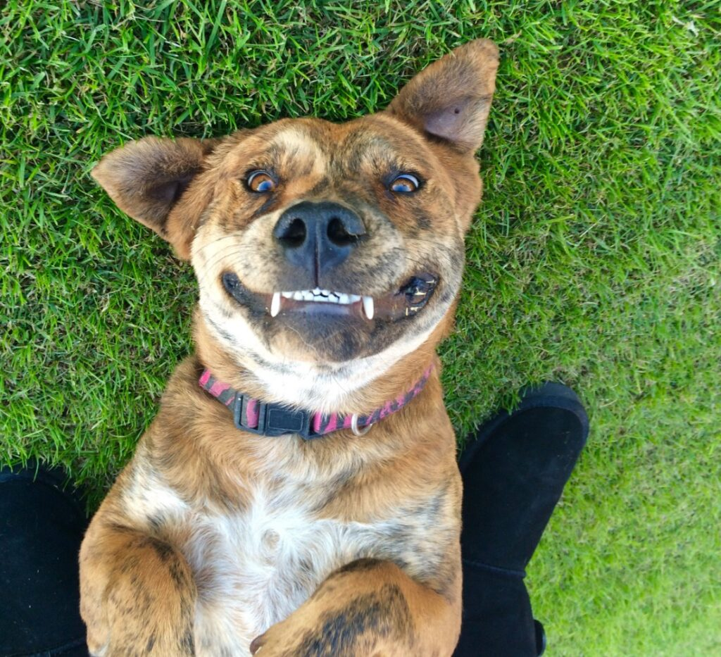 perro sonrisas