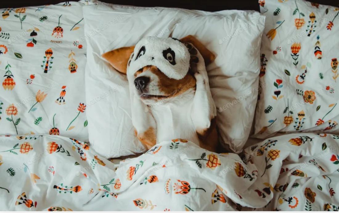Descubre lo que revela la postura de tu perro cuando duerme